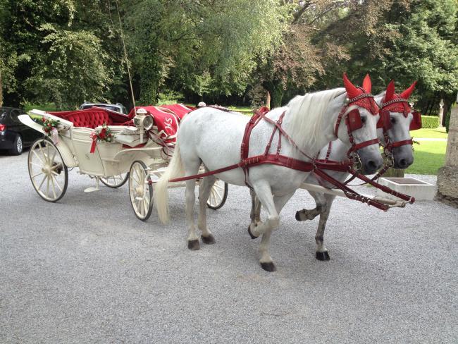 Weißes Pferdegespann mit weißer Hochzeitskutsche